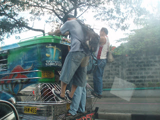 jeepney in marikina