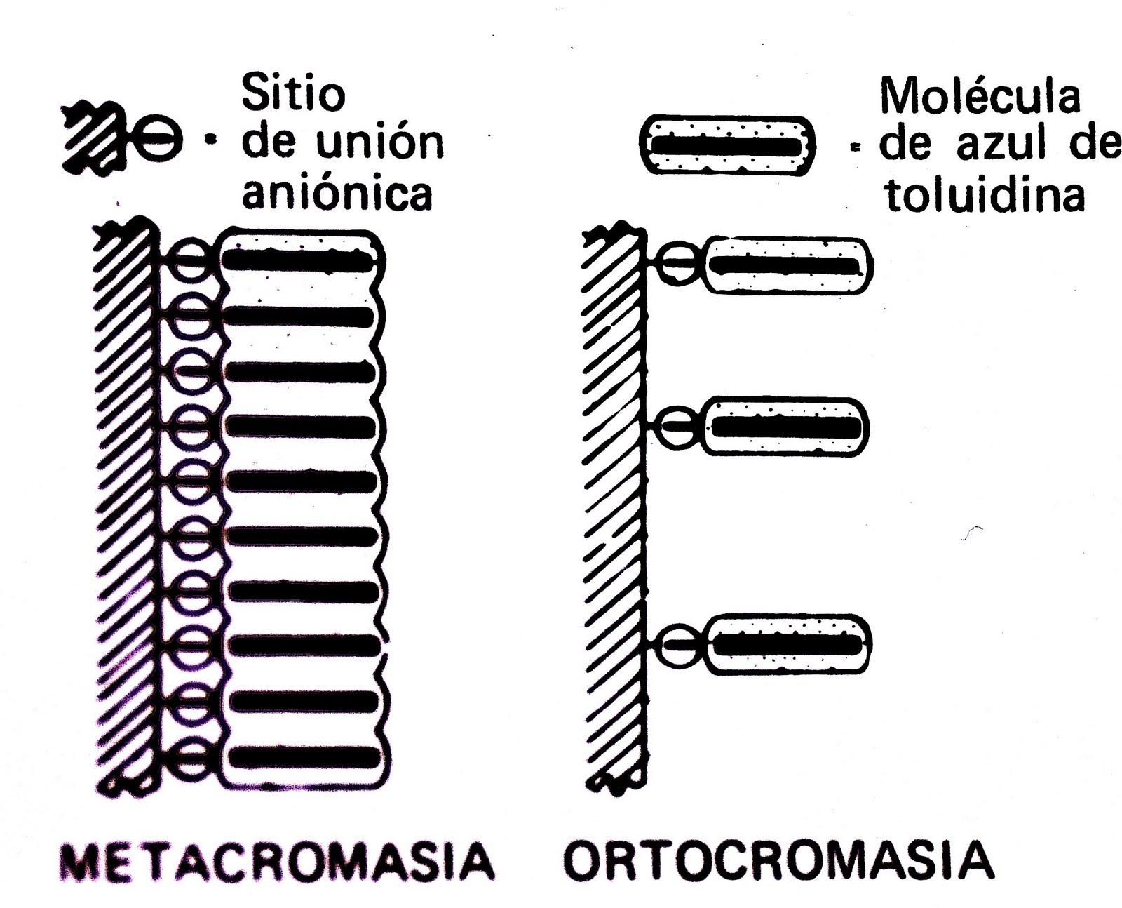 histopatologia forense