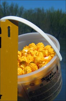 RR1 Cheddar popcorn