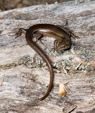 THE APPENDIX: How to catch a lizard