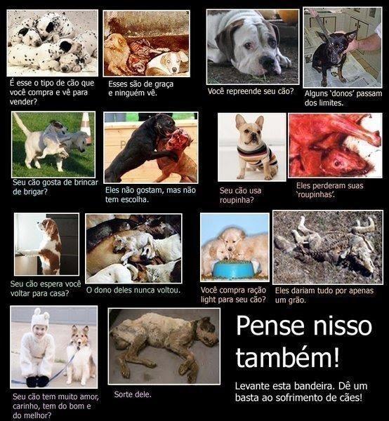 PENSE NISSO PROTEJAM OS ANIMAIS
