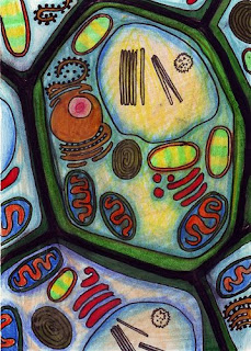 Plant cell (artwork) - Photo by R.W.W. (Ambra Galassi)