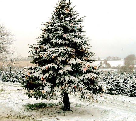 http://3.bp.blogspot.com/_yjoHQ1VxN6I/TJ2P-83kx3I/AAAAAAAAAFQ/D3WdONXbxto/s1600/christmas_tree_06.jpg