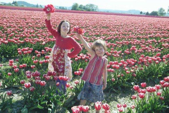 [tulipsy2]