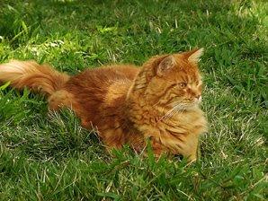 Lex no quintal