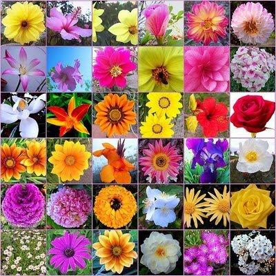 Hay una gran variedad de flores curativas en los bosques , desiertos y diferentes lugares del mundo