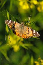 _Butterfly_Effect_