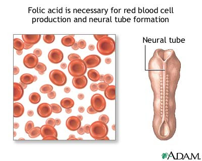 ... folic acid supplement before u get pregnant... about 1-2 months before u ...