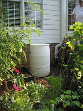 Rain barrel in its place in the vegetable garden