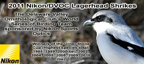 2011 Nikon/DVOC Lagerhead Shrikes