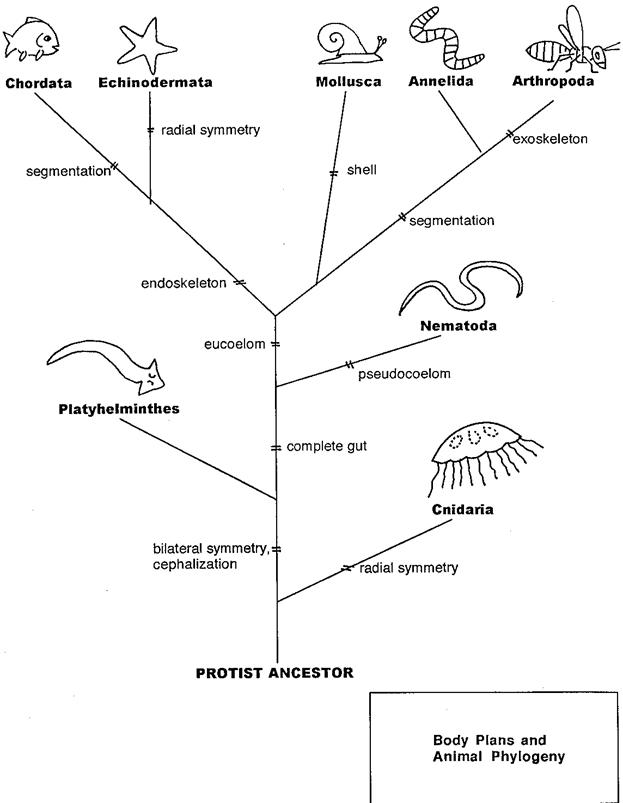 The first law of ecology the key to classifying mla mcgraw hill taxonomic classification and phylogenetic trees mcgraw hill higher education the mcgraw hill companies 2001 web 12 aug 2010 ccuart Choice Image
