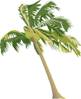 Realistic Palm Tree Clip Art image