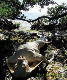 Sereia de Manaus – Praia da Lua