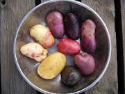 Grønsaksbloggen