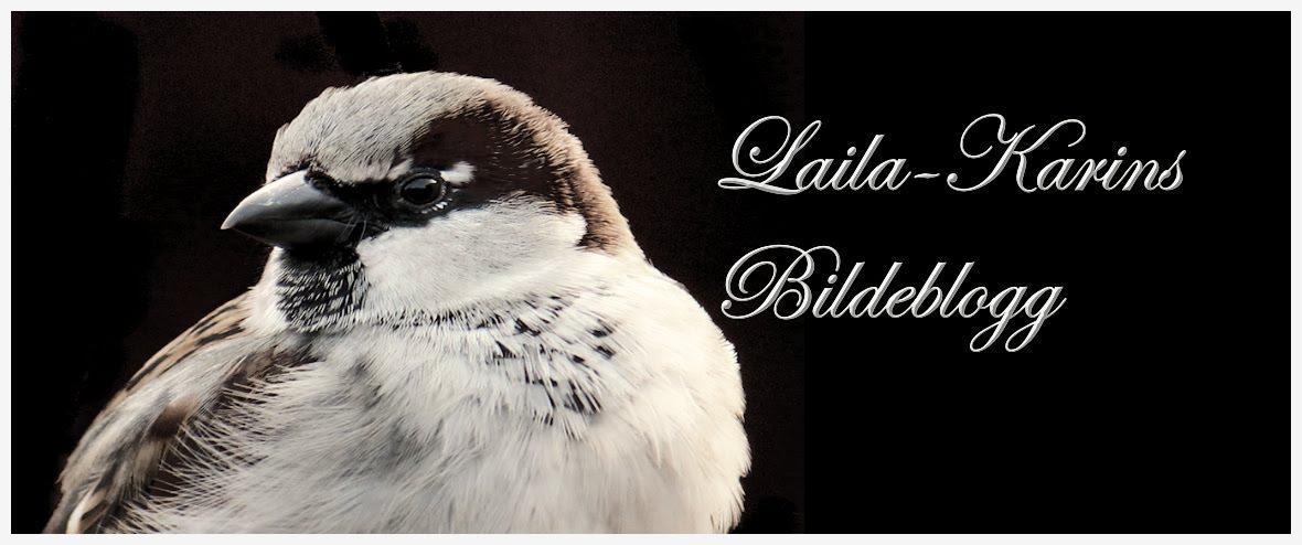 Laila-Karins bilder