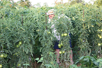 Jonathan Eller in his tomato plants