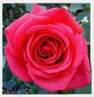 La flor del amor