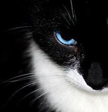 Medicine Cat-Nestflame-tom