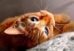 Warrior-Sunnyblade-she-cat