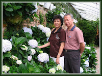 John and Jacq amongst the hydrangeas at Cactus Valley, Cameron Highlands