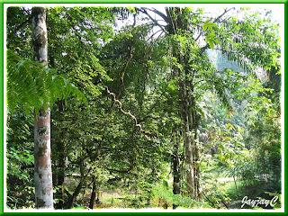 Tropical rainforest at Rimba Ilmu Botanic Garden (Forest of Knowledge), Universiti Malaya