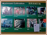 Photo illustration of mushroom cultivation