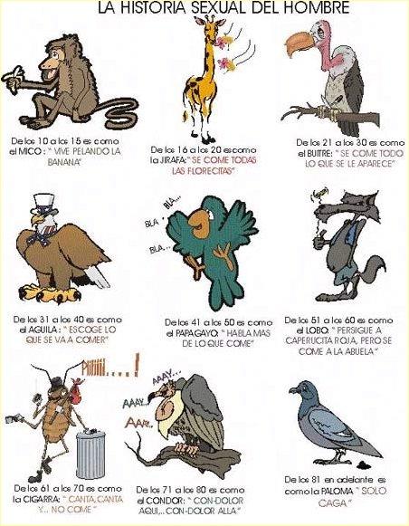 [humor+animales+(38).jpg]