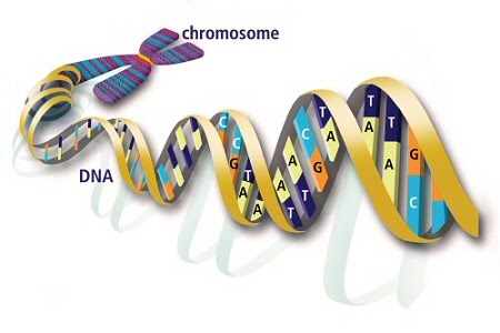 does letters dna stand image search results