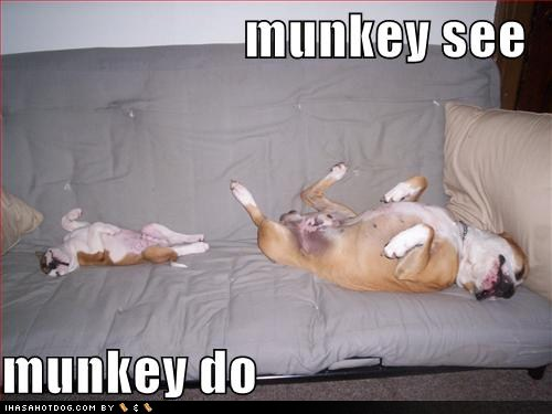 [funny-dog-pictures-monkey-see.jpg]