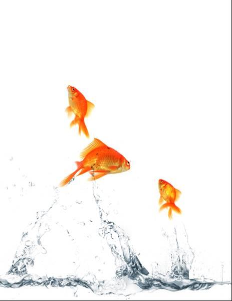 fish on prozac 1 behav neurosci 2008 apr122(2):426-32 doi: 101037/0735-70441222426 fish on prozac: effect of serotonin reuptake inhibitors on cognition in goldfish.