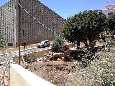 En la imagen podemos ver el árbol derribado y troceado con la iglesia de San Isidro al fondo