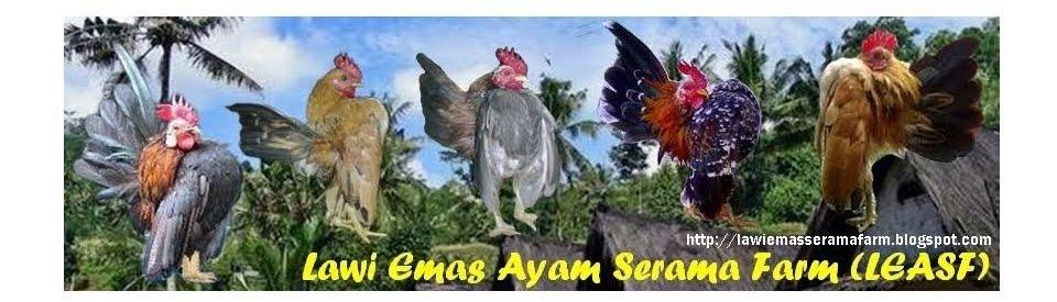 Lawi Emas Ayam Serama Farm (LEASF)