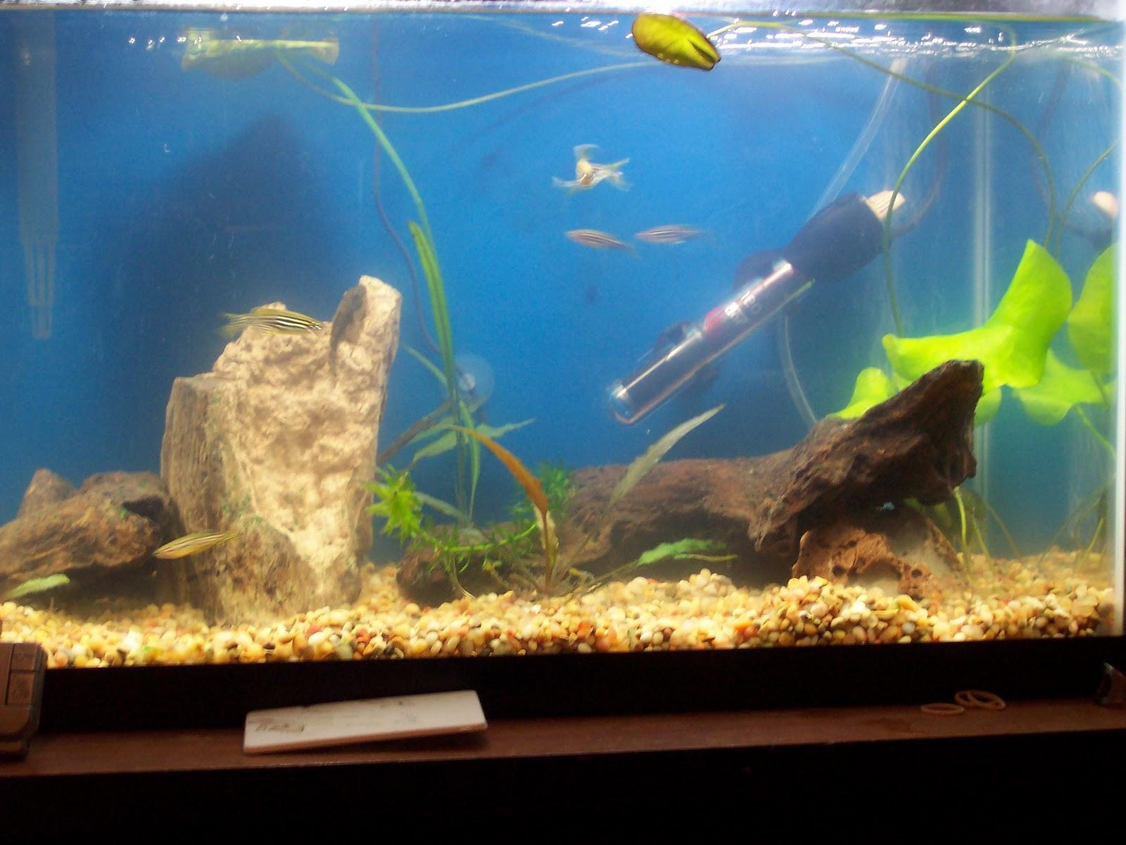 My 10 gal planted aquarium october 2010 for Bacterial bloom fish tank