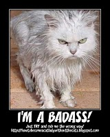 The I'M A BADASS award, from Catlady