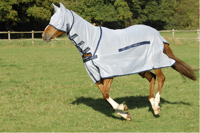 horse wearing protective covering