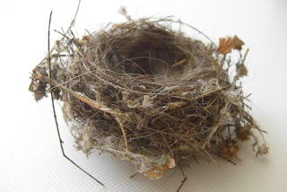 Natural Nest of birds