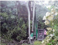 Ular Raksasa Kalimantan Tertangkap! Panjangnya 12 Meter
