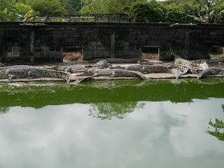 Borneo : Penangkaran Buaya di Juwata Tarakan - Ardiz Tarakan Borneo