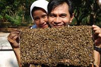 Foto : Ternak Lebah Madu Pertama di Kota Tarakan