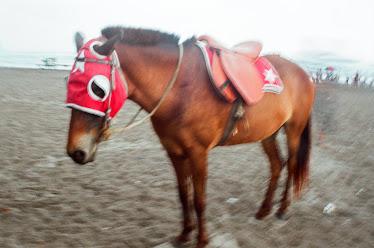 Kuda Di Pantai Parang Tritis YOGYAKARTA.