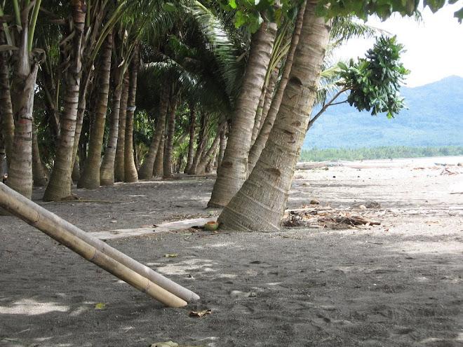 Nyiur melambai di pantai susupu