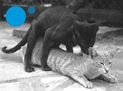 Домашний кот и секс