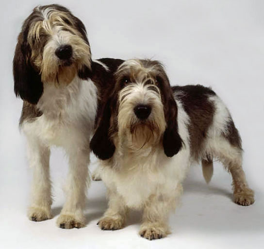 Welcome to annabel 39 s canine blog where the place goes to the dogs january 2011 - Petit basset hound angers ...