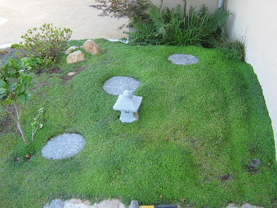 Niwaki horizon du japon helxine soleirolia soleirolii for Jardin japonais plantes couvre sol
