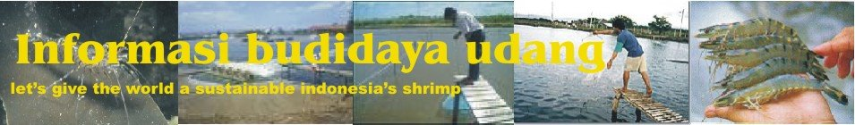 Informasi Budidaya Udang