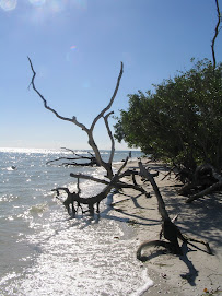 Sanibel Solitude