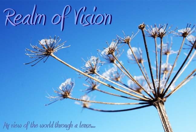 Realm of Vision