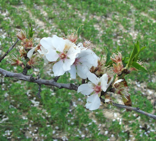 Epicuro e w la vita poesia di primavera - Poesia specchio quasimodo ...