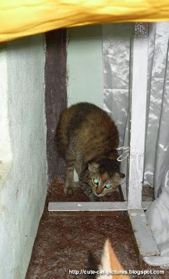 anak kucing ketakutan