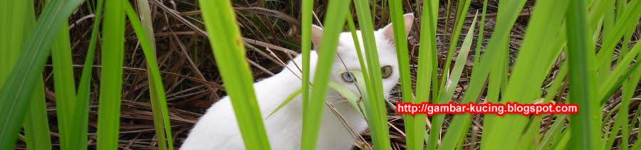 Gambar kucing comel cute